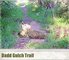 dadd_gulch_header